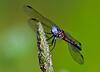 Dragonfly-07-15-02b