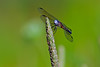 Dragonfly-07-15-02a