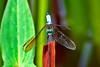 Dragonfly-08-16-01b