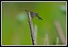 Dragonfly-07-15-01cr