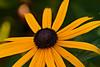 Flower Garden at Prescott Park