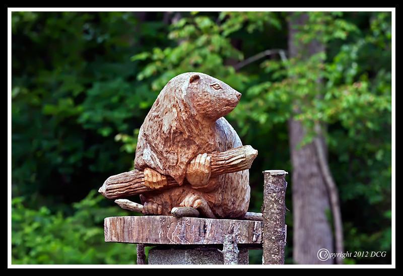 Beaver-06-11-01cr