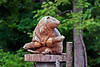 Beaver-06-11-01