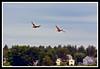 Mallard Duck-06-11-02acr