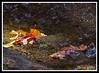 Autumn Leaves at the Basin