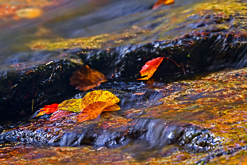 Autumn Leaves in Cascade Brook