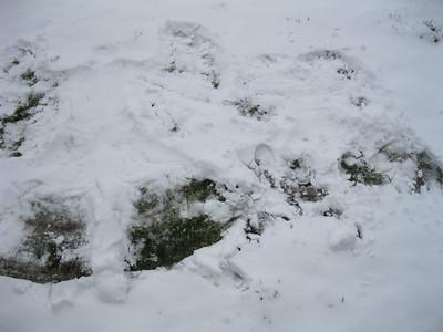 Snow Day in Mokane