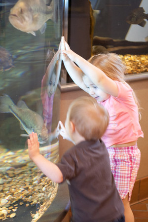 Visiting Audrey - Fish and Turtles