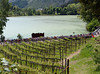 Water or wine, the Giro peloton flies through Trentino in pursuit of another escape attempt...