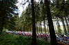The peloton climbs towards Belgium's highest point amid thick forests...