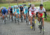 Svein Tuft leads the peloton for Green Edge on the cobbles at Kergate...