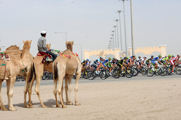 A group of racing camels watched a bigger group of racing cyclists start the stage...