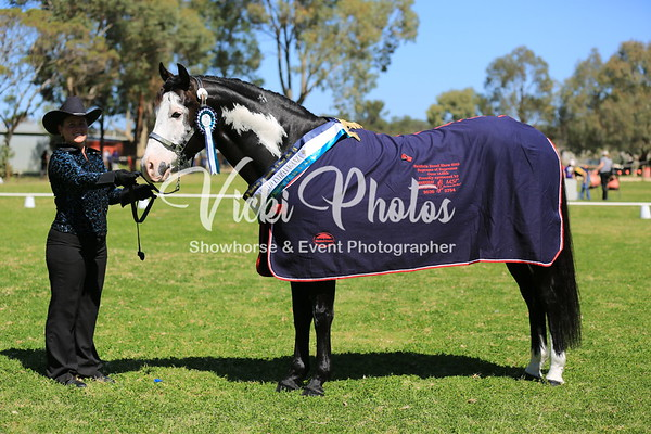 Baldivis Pre-Royal Breed Extravaganza  -  16.9.2012