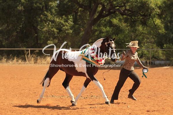 Darling Range Halter All Breed Show