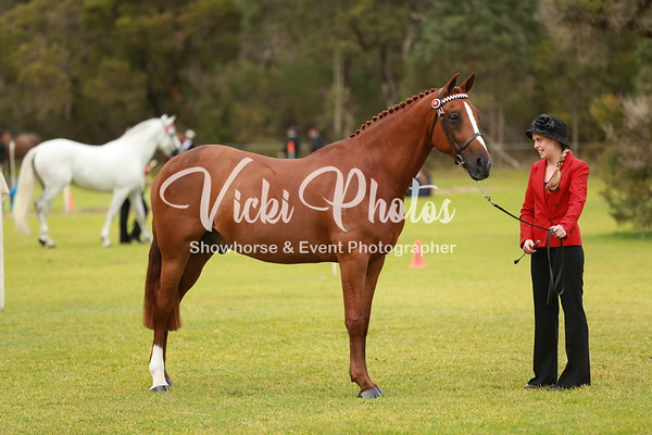 Gosnells Winter Breed Showcase - 5.8.2012