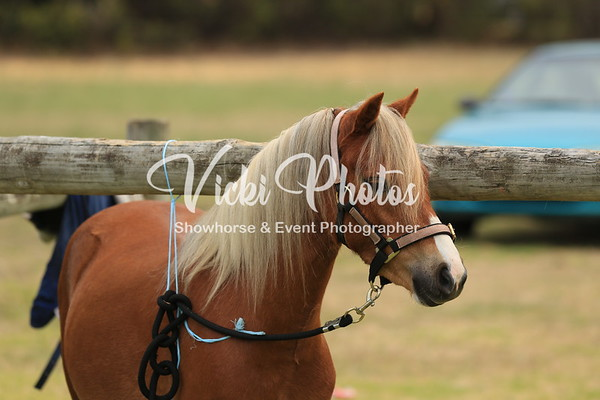 WAPA All Breeds Show  -  2.12.2012