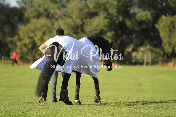 Warmbloods Gala Showcase - 29.4.2012