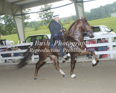 CLASS 4  NATIONALBRED AMATEUR