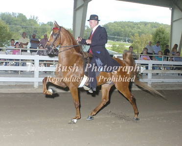 CLASS 6  SADDLEBRED OPEN
