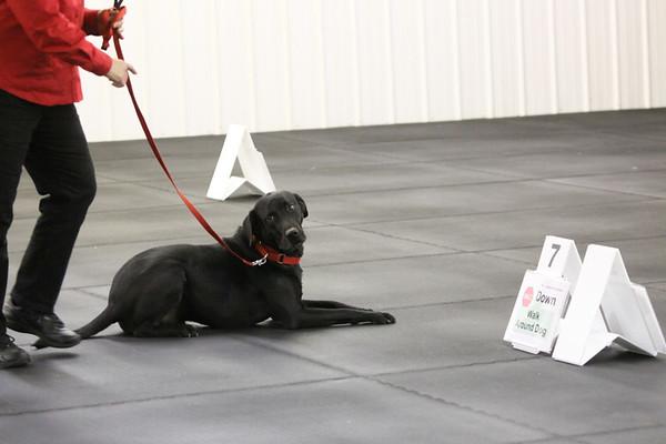 2012 UKC TOTAL DOG CDST