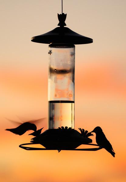hummer-silhouette-L.jpg