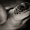 Honorable Mention<br /> Advanced Animal<br /> Brandon Merz <br /> Episcopal HS<br /> Bellaire, TX<br /> Instructor: Kate Philbrick