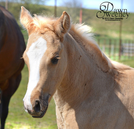 All In Elegance and foal Lexus