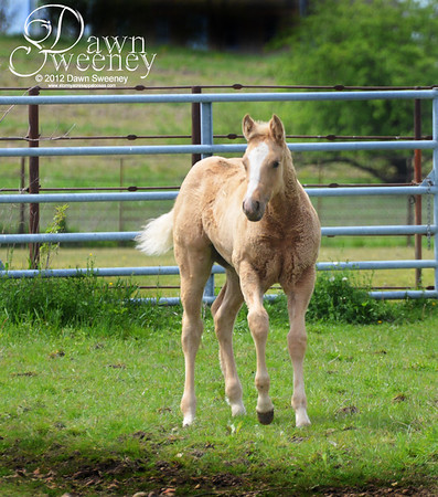 mares and foals may 2012