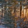 Winter Sunrise, Great Bay, NH