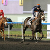 Meydan Domestic Horse Race Meeting, Dubai, 13 Mar 2014