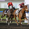 Meydan Domestic Horse Race Meeting, Dubai, 13 Mar 2014
