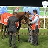 Meydan DWC Super Saturday Carnival Horse Race Meeting, Dubai, 8 Mar 2014