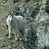 Glacier Bay 04 #3 163.jpg