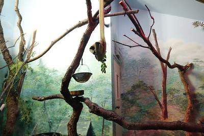 2013-Aug-Lodi-Zoo-Visit