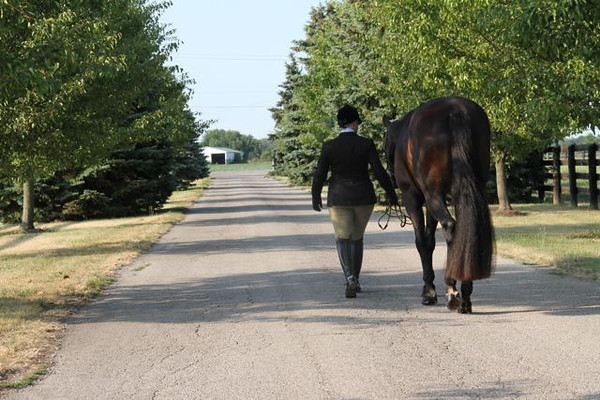 DDG Performance Horses