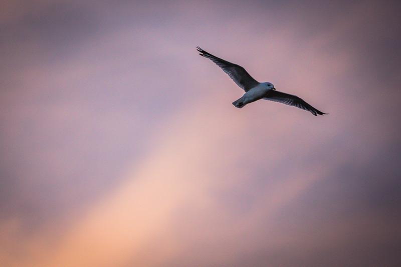 London Seagull