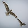 St Andrews Seagulls