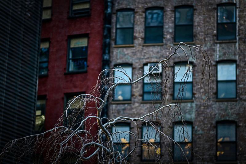 a tree in winter, new york city <p></p> day 21/365 for my 2013 daily photo journal