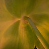 softly glowing orchid <p></p> day 24/365 for my 2013 daily photo journal
