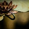 water lily, heavy metal <p></p> photographing water lilies is a subject that i love. this is the first opportunity i've had to capture one in metal. <p></p> this was photographed at night with a Zeiss Makro-Planar T* 100mm f/2 ZF.2 lens on a Nikon D800 camera body.