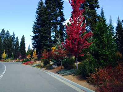 Fall Colors in Plumas County by Jean Loosemore
