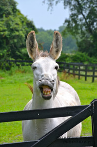June - Meet the funniest donkey you'll ever see.