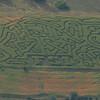 """Corn Maze.  Cousin Dan tells me that FSI stands for """"Farm Scene Investigation"""""""