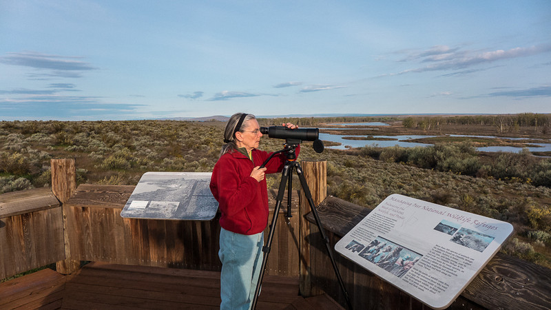 On the way to Portland, we stopped in Boardman, Oregon and went to the Umatilla Wildlife Refuge for bird watching & photos.