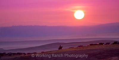 2013 Duane Martin Livestock - Cardoza Ranch