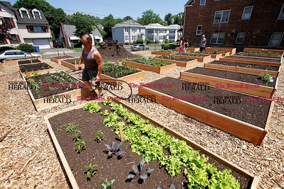 Kevin Bartram | Staff Joe Panza tends to his four plots in the community gardens on Chapman Street in New Britain on Sunday. The gardens officially opened with a ribbon cutting ceremony on Monday.