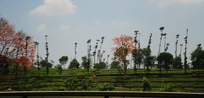 Obligatory pic from moving car - on our way to Bandung
