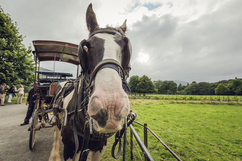 Muckross Carriage Tour