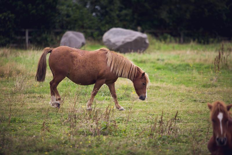 Kerry Bog Pony