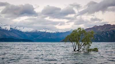 Lonely Wanaka Tree